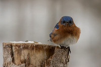 Backyard Birds 2014 0293