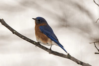 Backyard Birds 2014 0048