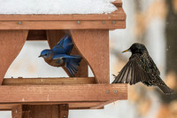 Backyard Birds 2014 0572