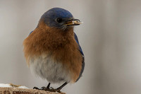 Backyard Birds 2014 0366