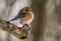 Backyard Birds 2014 0334