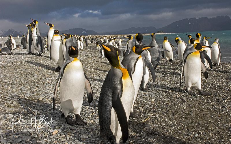 Antarctica 2-06 3608pc8x10